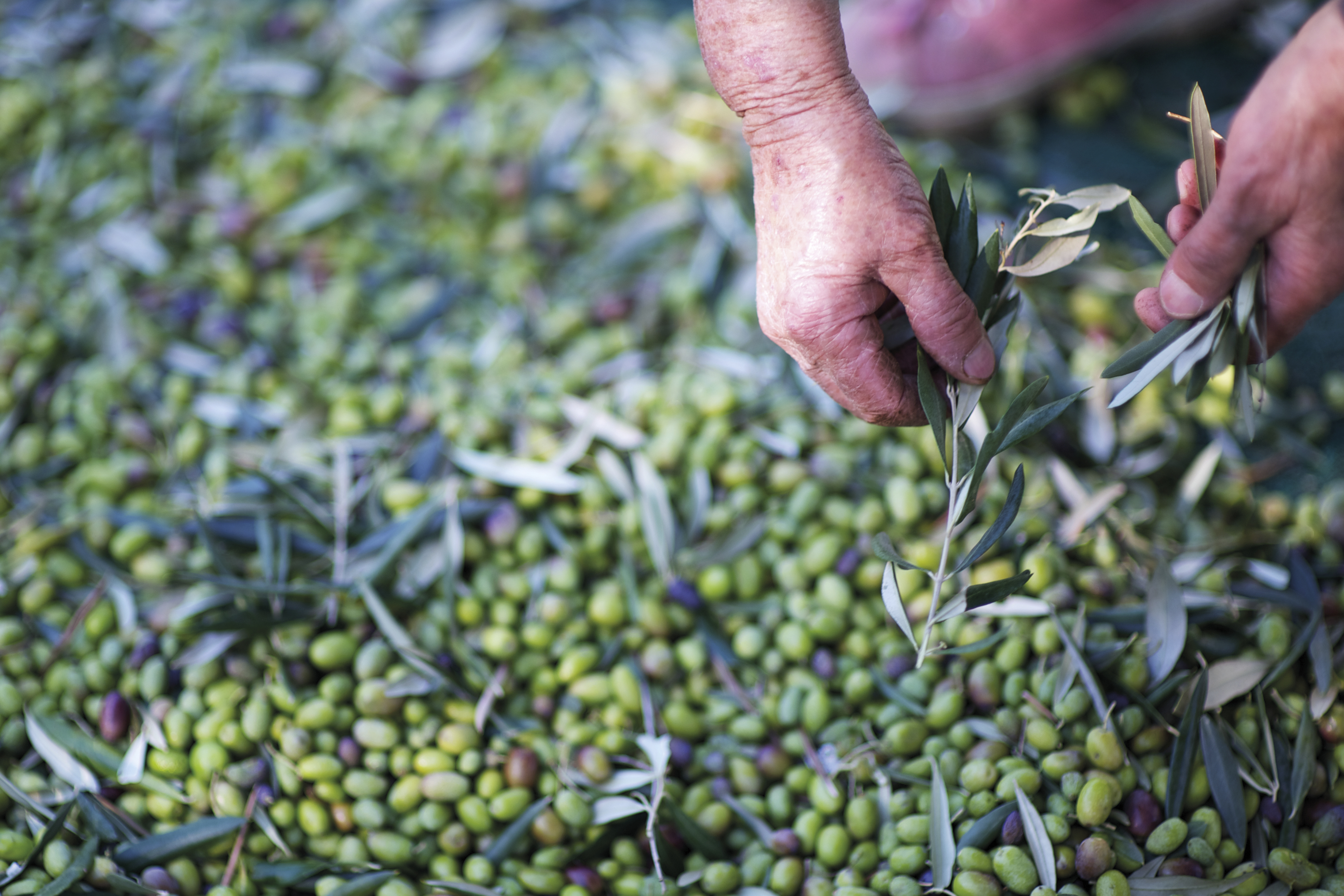 What is EVOO? | Flavor Your Life